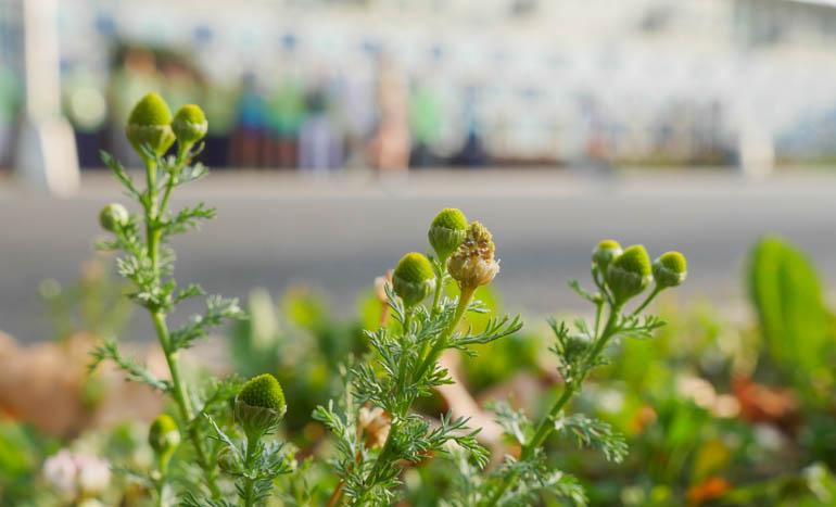flower-1260138