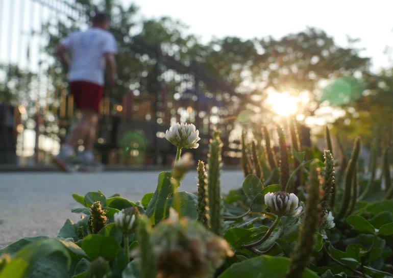 flower-1260771
