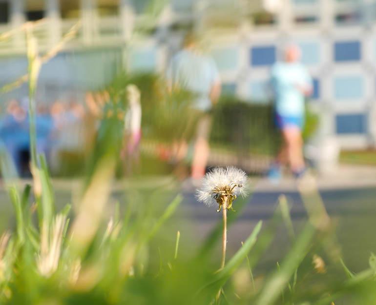 flower-1260857