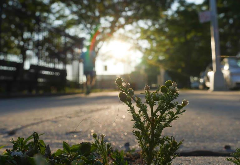 flower-1280748