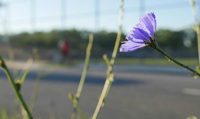 flower-1280771
