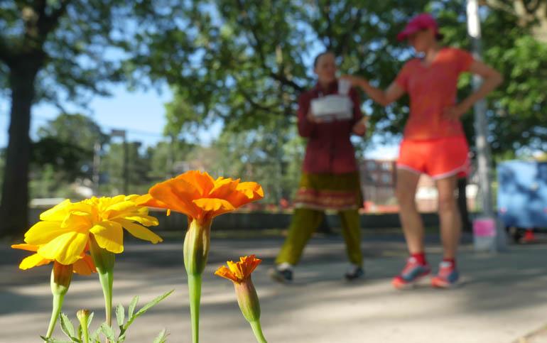 flower Kaneenika-1280895