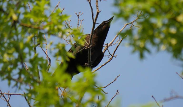 flower crow-1260137