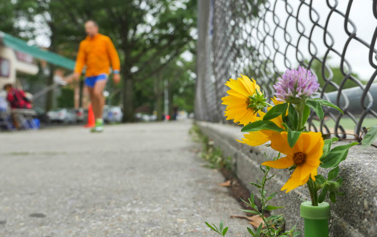 flower sopan-1280209