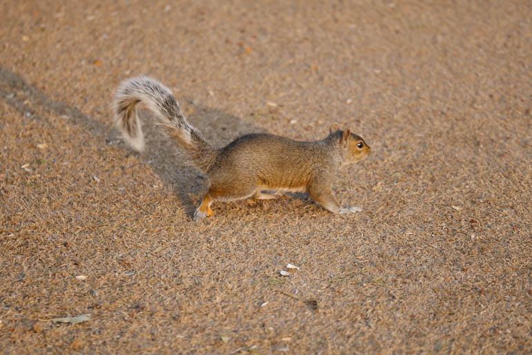 flower squirrel2-1260016