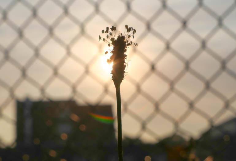 flower sun-1260064