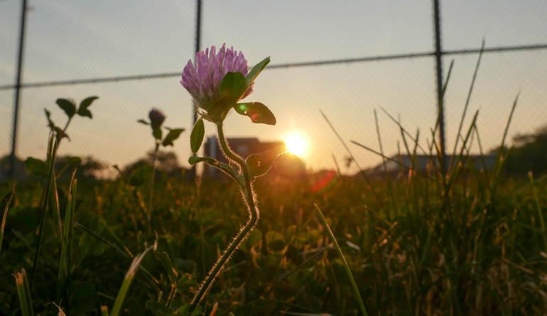 flower sun-1270286
