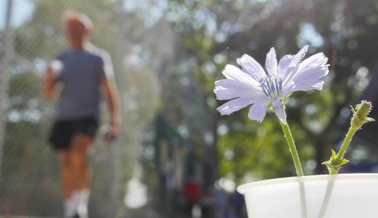 flower volody-1270848