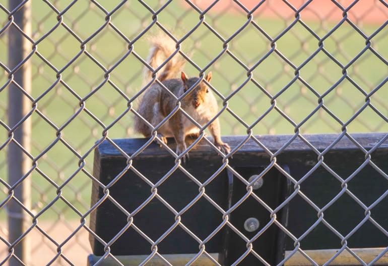 squirrel-1270343