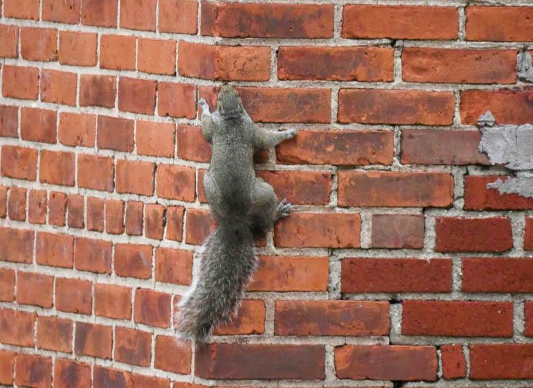 squirrel-1270982