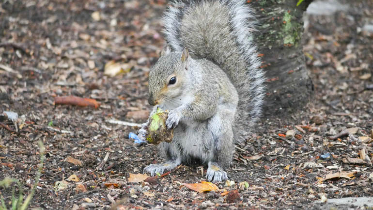 squirrel 3-1270985