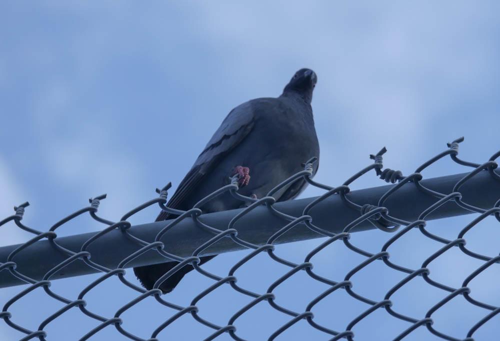bird-1370884