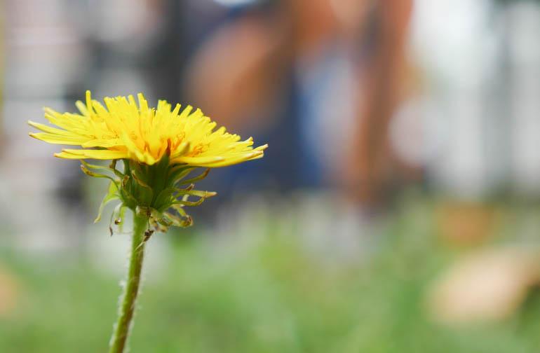 flower-1370296