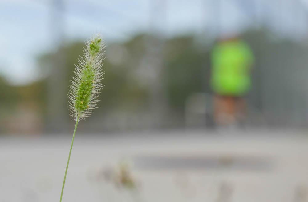 flower-1370758
