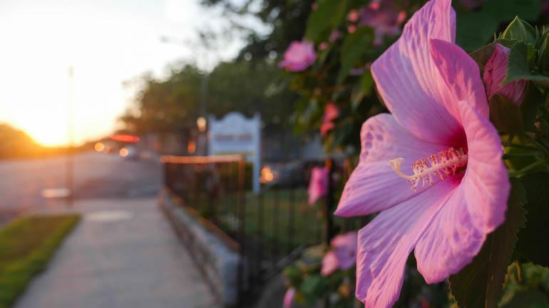 flower-1380159