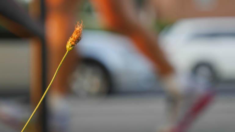 flower-1380165