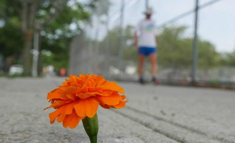 flower ananda-lahari-1390329