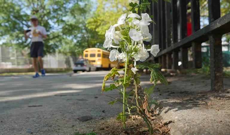 flower ashprihanal-1370083