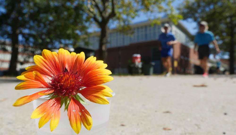 flower ashprihanal-1380115