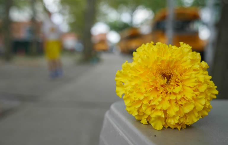 flower ashprihanal-1390571