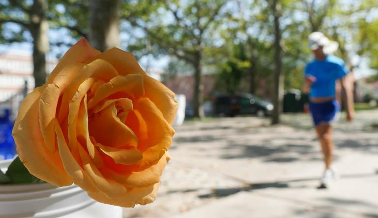 flower atmavir-1360189