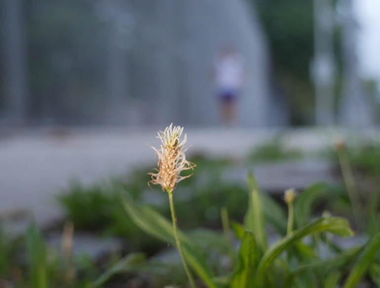 flower atmavir-1390367