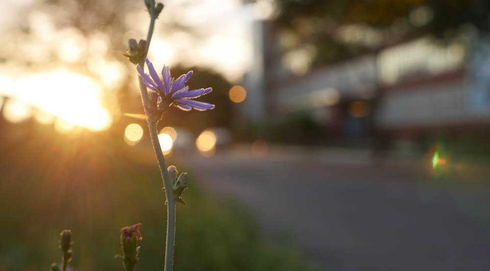 flower dawn-1370741