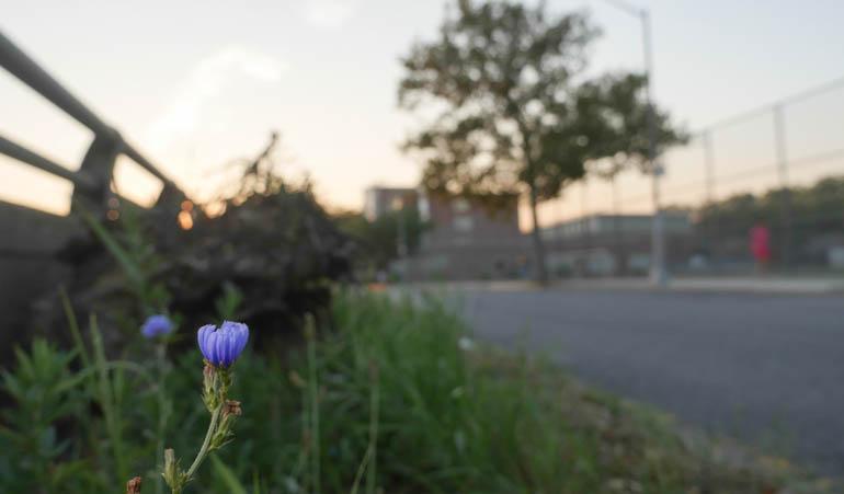 flower kaneenika-1380157