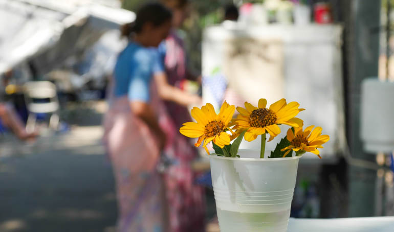 flower nirjharini-1360588