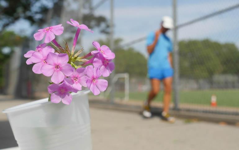 flower sopan-1360475