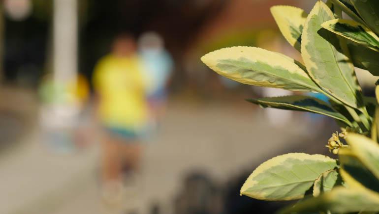 flower sopan-1370558