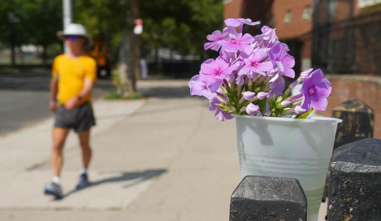 flower stutisheel-1340467