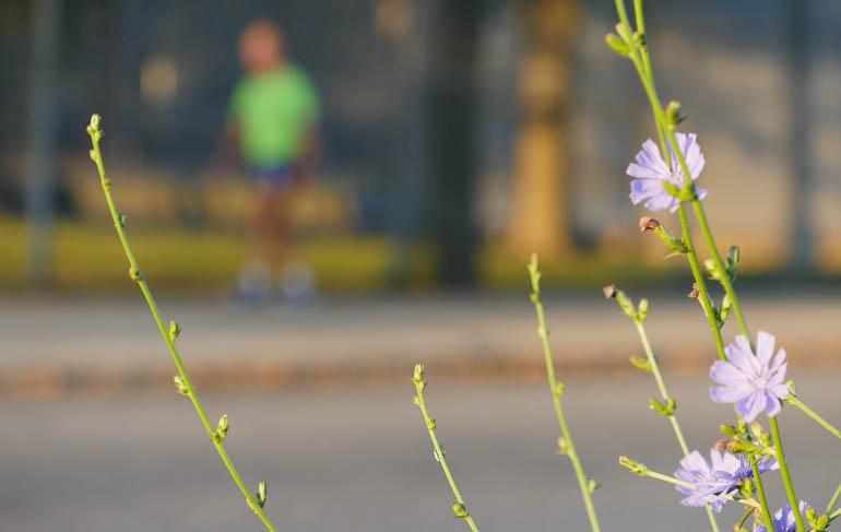 flower stutisheel-1360731