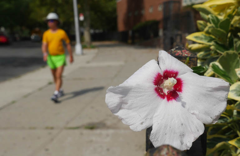 flower stutisheel-1380481