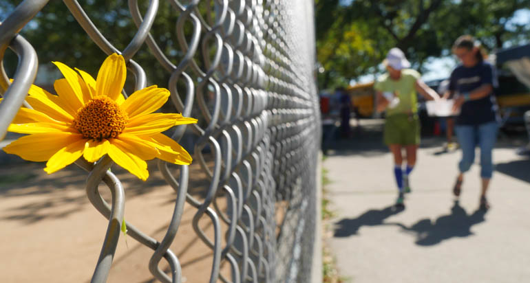 flower surasa-1360875