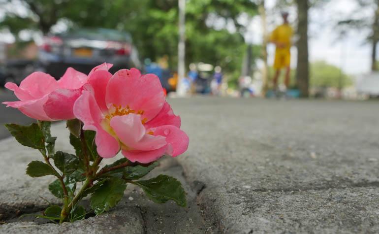 flower vasu-1330543
