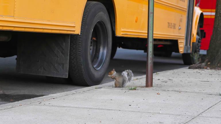 squirrel-1380137