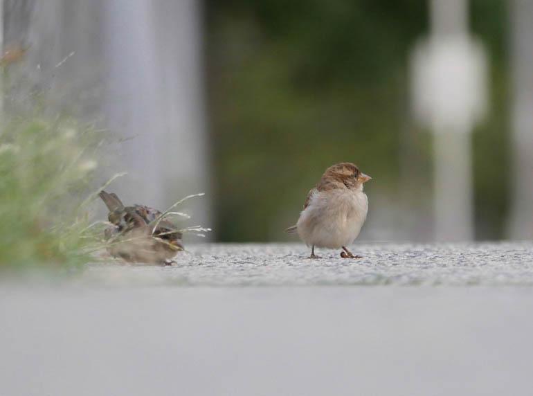 bird-1410340