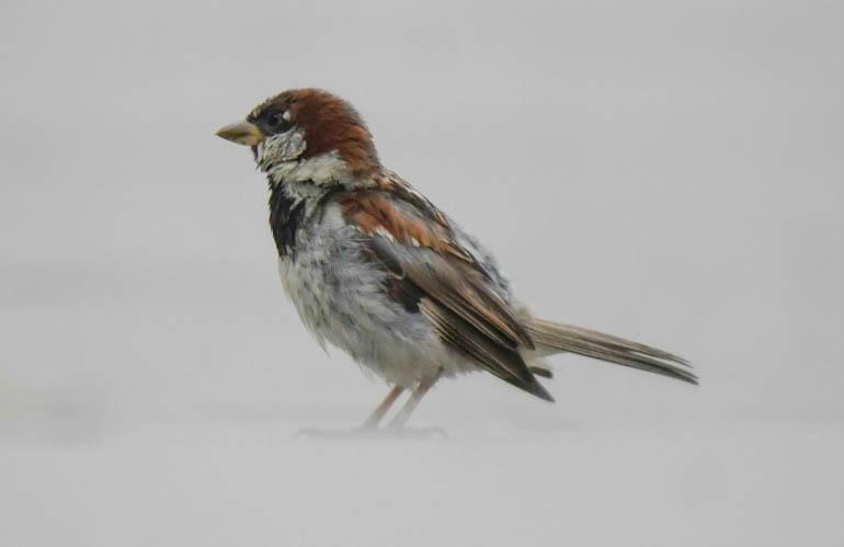 bird-1410509