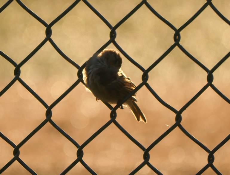 bird-1410652