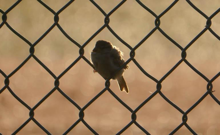 bird-1410653