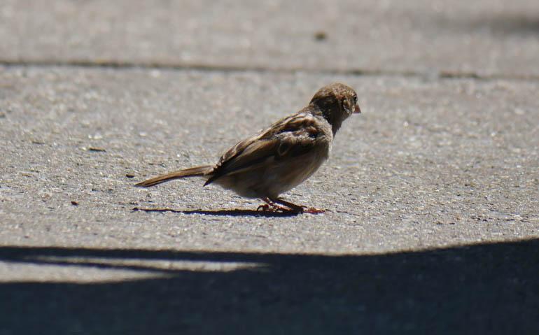 bird-1410760