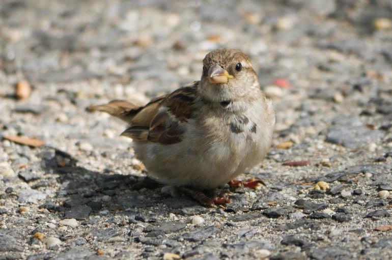 bird food-1420125