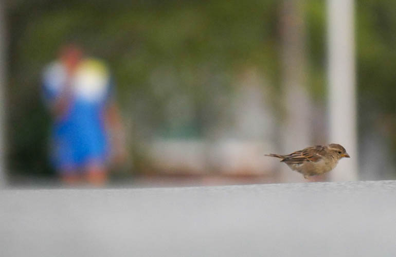 bird sopan-1410353