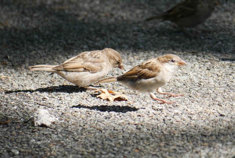 birds-1300101