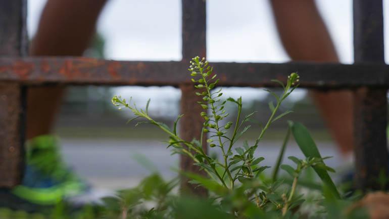 flower-1390985