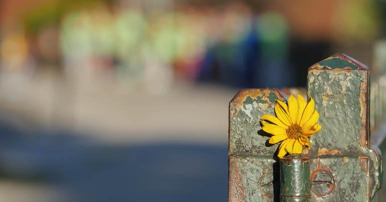 flower-1400497