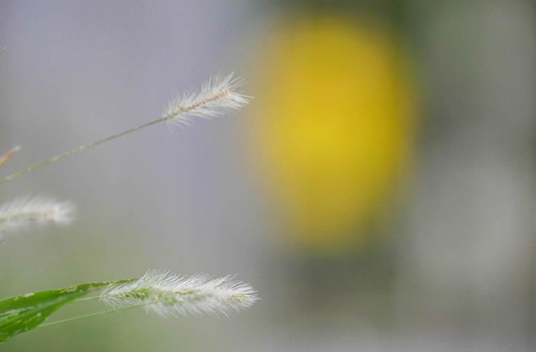 flower-1410349
