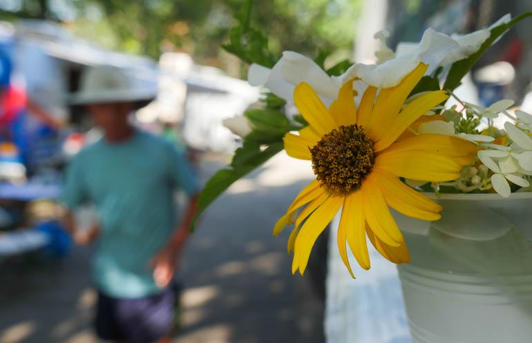 flower ananda-lahari-1410189