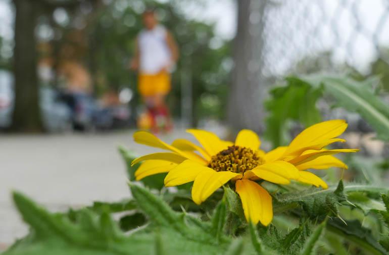 flower atmaivr-1390838
